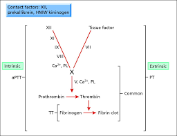 Simplified Coagulation Cascade Indicating The Intrinsic