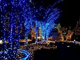 Christmas lights ideas homesfeed Outdoor Decor Christmas Blue And White Christmas Lights Homesfeed Led For Tree Amazing Picture Ideas Medium White House Blue And White Christmas Lights Homesfeed Led For Tree Amazing