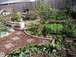 Small Picture Organic Gardening