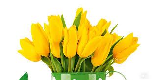 Katere rože podariti ob posebnih priložnostih?