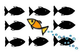 Image result for fish swimming upstream