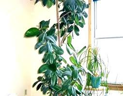 full size of best indoor plants for low light uk cats and dogs good office desk large