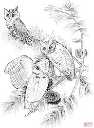 Small Picture Perched Screech Owls coloring page Free Printable Coloring Pages