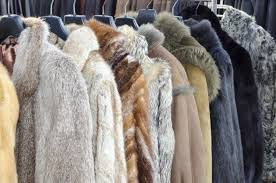 london fashion week has recommended attendees avoid fur but to protect the fur wearers not the animals the independent