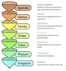 Classification Ck 12 Foundation