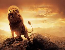 roaring lion wallpaper hd 1080p. Modren Wallpaper Angry Lion Wallpaper On WallpaperGetcom On Roaring Hd 1080p A