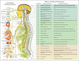 Autonomic Nervous System And Vertebral Spinal Subluxation