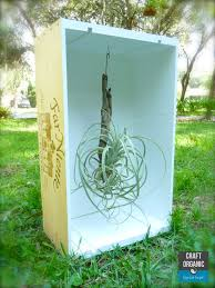 Air Plant Display Air Plant Display In A Wine Crate Craft Organic