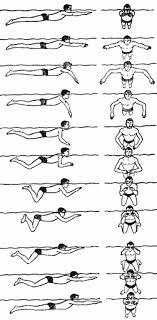 Реферат Техника плавания брассом  движения при транспортировке пострадавшего и различных предметов Брасс применяется также при плавании под водой Каждый цикл движений в этом способе