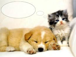 puppies images cute puppy hd wallpaper and background photos