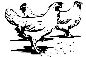 Vogels Kleurplaten