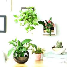 plant wall hangers indoor plant wall hangers indoor hanging with regard to plants wall brackets for plant wall hangers indoor