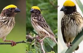 Lagu lagu yang dinyanyikan oleh rafika duri berikut ini download suara trucukan gacor ngerol banyak pilihan hobi burung. Index Of Wp Content Uploads 2019 12