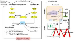 Hpa Axis Ijms Free Full Text Association Between Stress And The Hpa Axis