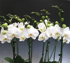 Купувайте и продавайте изгодно стайни растения онлайн в ① bazar.bg. Podhodyashi Stajni Rasteniya Za Zaeti Hora Vsichko Za Zhenata