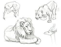 Sketches Animal Animals Sketches Under Fontanacountryinn Com