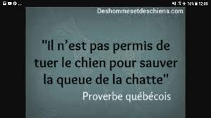 Proverbescitations Proverbe Québécois Wattpad