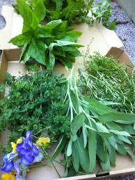 Our Kitchen Garden This Mornings Herb Harvest From Our Kitchen Garden Basil Lemon