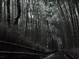 雪の嵐山 竹林の小径 京都写真日記