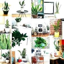 Tropical office plants Low Maintenance Office Freetimecyclingclub Office Plant Ideas Office Plants Interior Landscaping Tropical