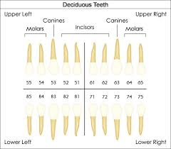 Fdi Notation Charting Dental Charts To Help You Understand The Tooth Numbering