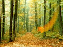 Funny Pictures Gallery Fall forest background fall backgrounds