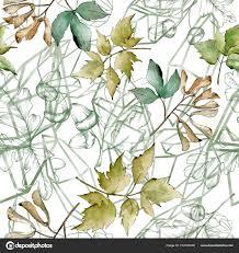 Groene Esdoorn Bladeren Blad Plant Botanische Tuin Floral Gebladerte