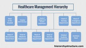Hierarchy Of Health Care Business Management Management