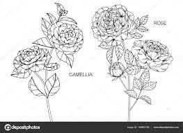 椿とバラの花図面と黒と白の線画でスケッチ ストックベクター