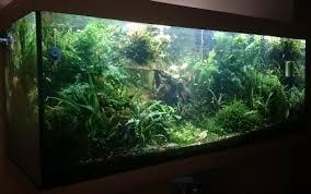 Charming Nach Langer Suche Für Die Optimale Aquarium Beleuchtung, Bin Ich Auf  LEDaquaristik Gestoßen. Vor Allem Die LED Strahler, Welche Die  Herkömmlichen ...
