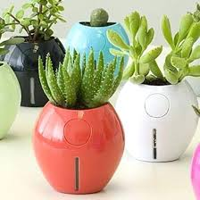 small plants for office. Indoor Small Plants For Office With No Natural Light