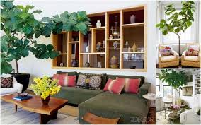 ... Gorgeous Home Interior Ornament With Various Indoor Plant Decoration :  Cozy Image Of Living Room Decoration ...