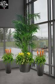 interior landscaping office. Digital Image Example - Air Strength Canada Office Plants Winnipeg Manitoba, Guelph Ontario, Interior Landscaping