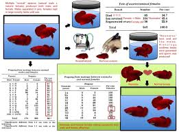 Betta Genetics Chart 64 Genuine Betta Breeding Chart