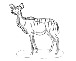 Small Picture Kudu Female illustration on Behance