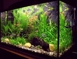 Low Light Cold Water Aquarium Plants Aquarium Wikipedia