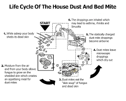 Dust mites, Dander and Dead skin cells - Carpet Dry-Tech