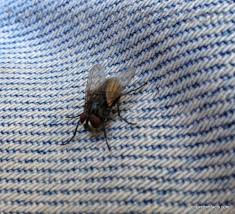 Maggots On Kitchen Floor Similiar House Fly Maggots Keywords
