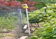 how to keep birds away from garden. Nice Keep Birds Away From Garden How To Out Of Your (Humanely)