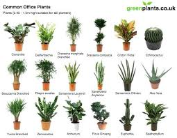 Best indoor plants for office Feng Shui Best Indoor Office Plants Common Office Plants Plants For Indoor Indoor Plants For Office Desk India Tall Dining Room Table Thelaunchlabco Best Indoor Office Plants Common Office Plants Plants For Indoor