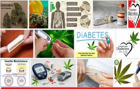 diabetes mellitus marijuana research papers