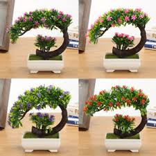 office bonsai tree. Wonderful Bonsai Image Is Loading HalfMoonFlowerBonsaiTreeinSquarePot In Office Bonsai Tree