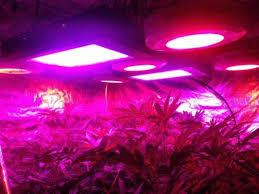 Led Light Distance Chart Proper Distance Of Full Spectrum Led Grow Lights Dorm Grow