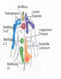 Neck To Buttocks Front And Rear Trigger Point Chart 3