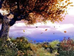 Pohon, Daun dan Angin