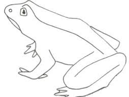 Parts Of A Frog Parts Of A Frog Printable By Lcallard21 Teaching Resources Tes