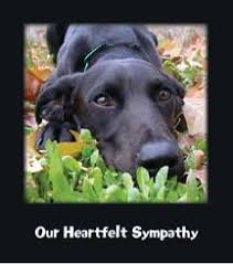 send your pet friends family and colleagues a heartfelt message of sympathy and support after the loss of their pet