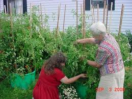Easy Container Garden Plans For The Home GardenerContainer Garden Plans Tomatoes