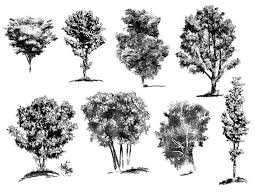 how to draw realistic trees plants bushes and rocks google search