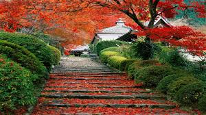 Image result for images of japan landscape